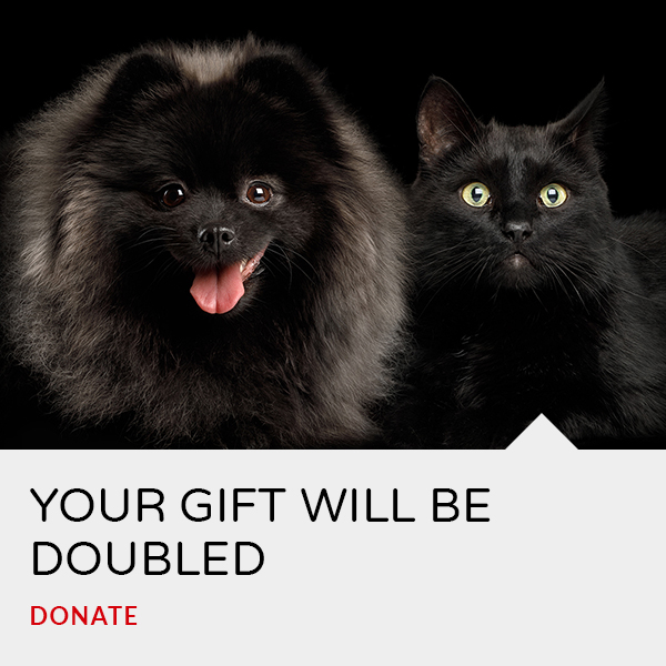 Your gift will be doubled